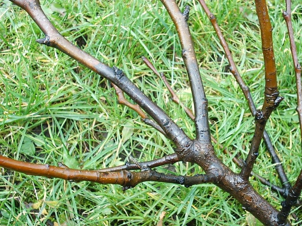 blad van boom herkennen